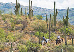 "Tucson Tops 2019 Fodor's Travel ""Go List"" for North America"